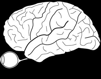Brain-Eye-Sketch