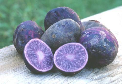 Blue Colored Foods Recipes